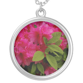 Floración de la azalea en el collar de la plata