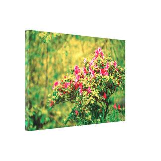 Floración de la azalea impresión en lienzo
