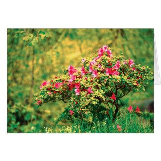 Floración de la azalea tarjeta de felicitación