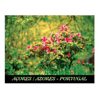 Floración de la azalea tarjeta postal