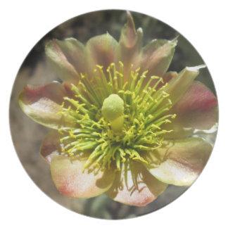 Floración de la flor del desierto de Cholla Plato De Cena