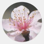 Floración de la frambuesa etiqueta redonda