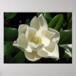 Floración de la magnolia impresiones