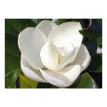 Floración de la magnolia comunicados personalizados