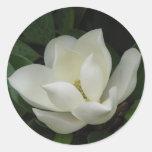 Floración de la magnolia meridional pegatinas redondas