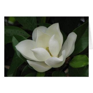 Floración de la magnolia meridional tarjeta de felicitación