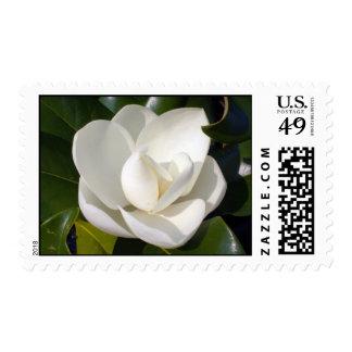 Floración de la magnolia sello