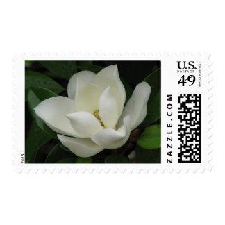 Floración de la magnolia sello postal