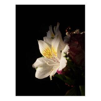 Floración de la mañana postal
