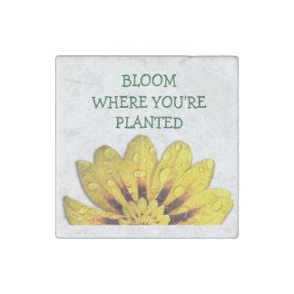 Floración de la margarita donde imán de piedra