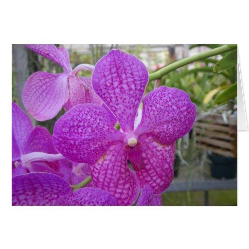 Floración de la orquídea tarjeta de felicitación