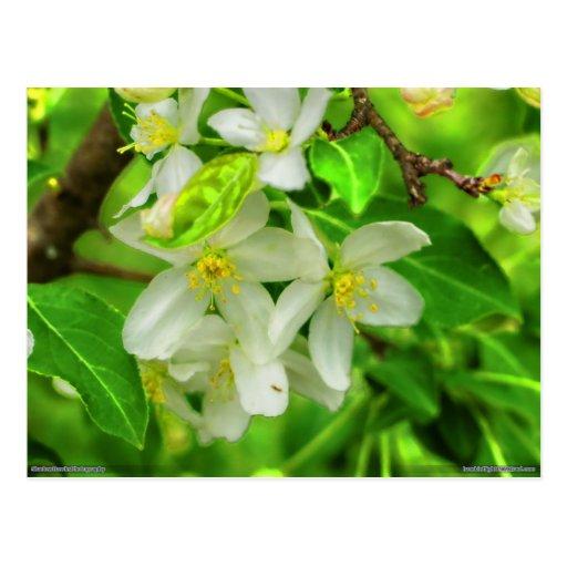 floración de la primavera postales