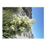 Floración de la yuca tarjetas postales