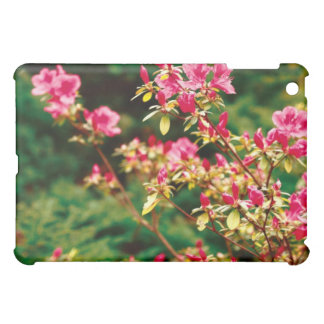 Floración de las azaleas