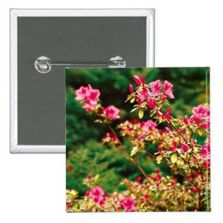 Floración de las azaleas pin cuadrada 5 cm