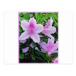 Floración de las azaleas postal