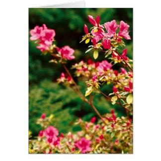 Floración de las azaleas tarjeta de felicitación
