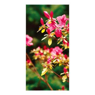 Floración de las azaleas tarjeta fotografica