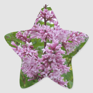 Floración de las lilas pegatina en forma de estrella