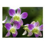 Floración de las orquídeas de Trorpical Postales