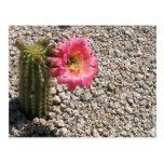 Floración de los cactus tarjeta postal