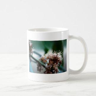 Floración de Massangeana Taza