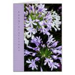 Floración del Agapanthus Tarjetón