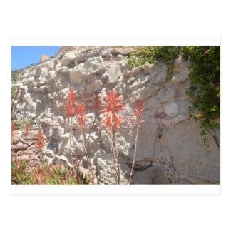 Floración del agavo tarjetas postales