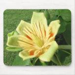 Floración del álamo de tulipán tapete de ratón