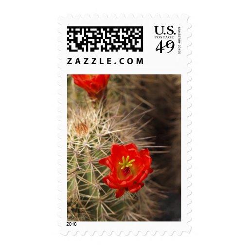 Floración del cactus