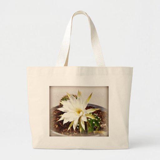 Floración del cactus bolsa