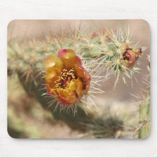 Floración del cactus de Cholla Tapete De Ratón