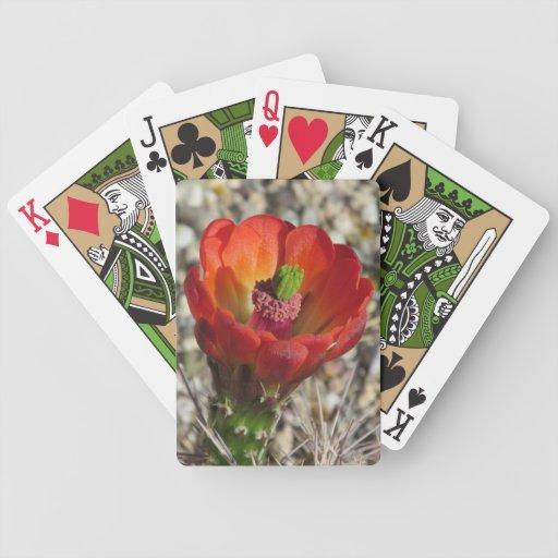 Floración del cactus de erizo de la taza de claret baraja de cartas