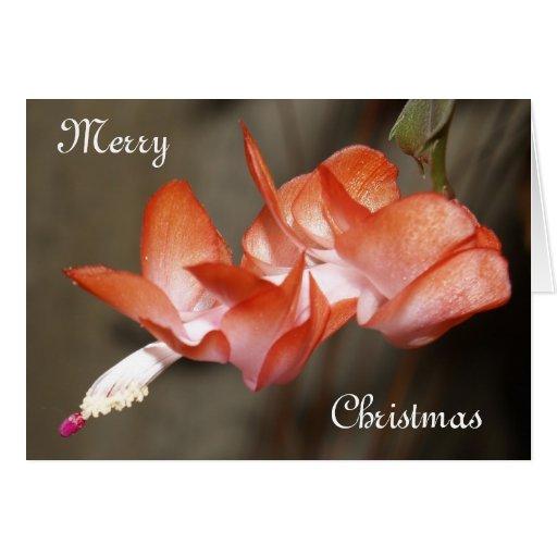 Floración del cactus de navidad tarjeta de felicitación