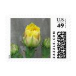 Floración del cactus del higo chumbo