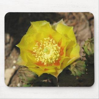 Floración del cactus del higo chumbo alfombrilla de ratón