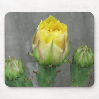 Floración del cactus del higo chumbo tapete de ratón