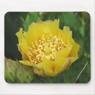 Floración del cactus del higo chumbo tapetes de ratones