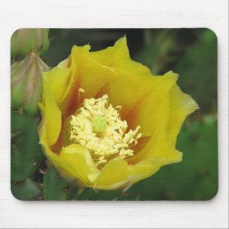 Floración del cactus del higo chumbo tapete de raton