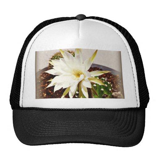 Floración del cactus gorro de camionero