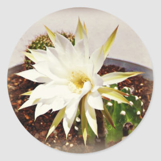 Floración del cactus pegatinas redondas