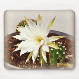 Floración del cactus alfombrilla de raton