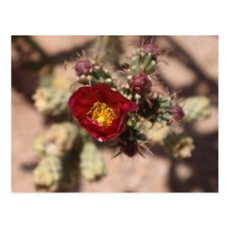 Floración del cactus tarjeta postal