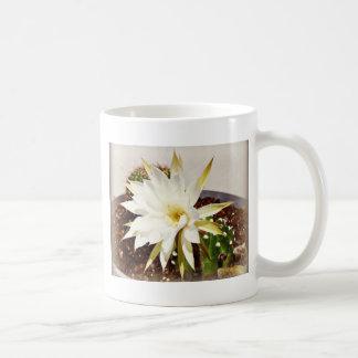 Floración del cactus tazas de café