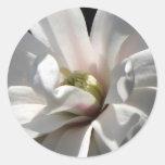 Floración del Centennial de la magnolia Pegatina