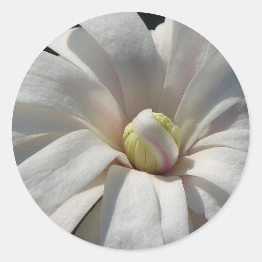 Floración del Centennial de la magnolia Etiqueta Redonda