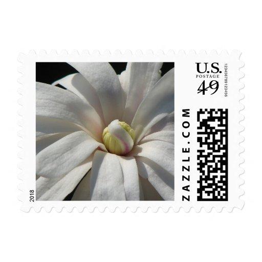 Floración del Centennial de la magnolia Sello