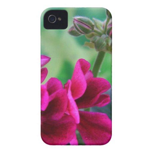 Floración del geranio iPhone 4 Case-Mate cárcasa