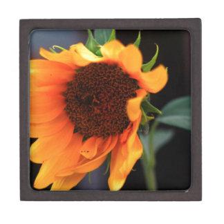 Floración del girasol caja de recuerdo de calidad