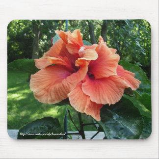 Floración del hibisco en el 2 de agosto tapete de ratón